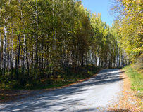 The road in the autumn wood Royalty Free Stock Image