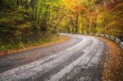 Road in autumn wood. stock photo