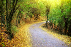 Road in autumn wood. Stock Photo