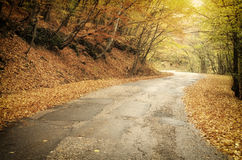 Road in autumn wood Royalty Free Stock Image