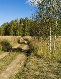 Road in autumn wood. Rural road in autumn wood on background blue sky Royalty Free Stock Photography