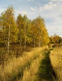 Road in autumn wood. Rural road in autumn wood on background blue sky Stock Photography
