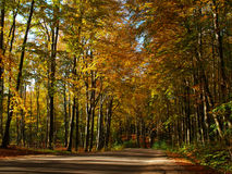 Road in the autumn woods Royalty Free Stock Photo