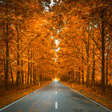 Road in autumn woods. Scenic road in autumn woods stock photography