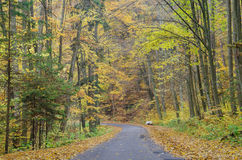 Road through the autumnal colorful forest Royalty Free Stock Photo