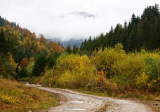 Road through the autumnal forest Stock Photography