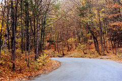 The road the autumnal forest Stock Photography