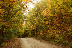 Road in the autumnal forest. Royalty Free Stock Photos