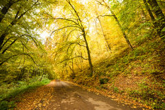 Road in the autumnal forest. Stock Photography
