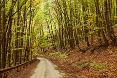 Road in the autumnal forest. Royalty Free Stock Image