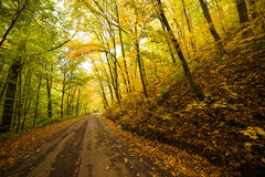 Road in the autumnal on the forest. Stock Photos