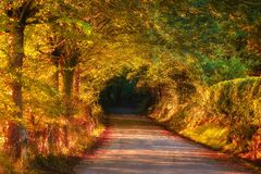 Road in autumnal forest stock images