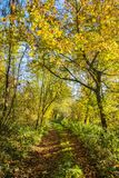 Road through autumnal forest with fallen colorful leaves Royalty Free Stock Photography