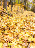 Road through autumnal forest with fallen leaves Royalty Free Stock Photography