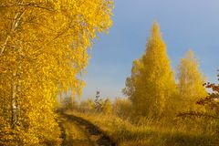 Road in the autumnal forest royalty free stock photography
