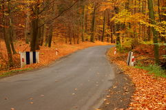 The road through the autumnal forest. Royalty Free Stock Photography
