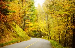 Road in the autumnal forest Royalty Free Stock Photos