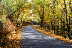 A road through the autumnal park Stock Image