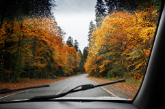 Road in autumnal rainy forest Royalty Free Stock Photos