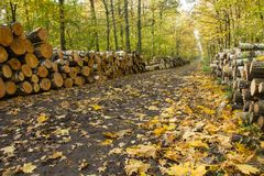 Road through the autumnal yellow forest royalty free stock images