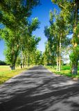 Road in the avenue stock image