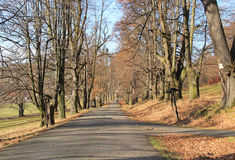 Road in the avenue of trees Stock Photography