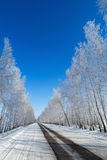Road on the background of snowy trees. Royalty Free Stock Photography