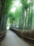 Road in bamboo forest Stock Images
