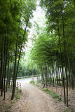 Road through the bamboo forest Stock Photography