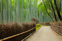 Road in Bamboo forest Stock Photo