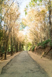 Road with bamboo forest Royalty Free Stock Photos