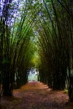 Road through bamboo forest and light end the end of tunnel royalty free stock photography