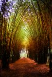 Road through bamboo forest and light end the end of tunnel royalty free stock photo