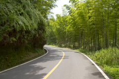 The road and the bamboo Royalty Free Stock Image