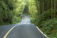 The road and the bamboo Stock Image