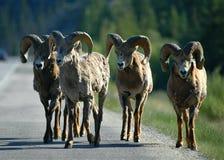 Free Road Bandits Royalty Free Stock Image - 16057066