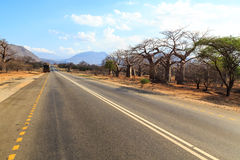 Road through the baobab forest valley in Tanzania Royalty Free Stock Images