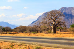 Road through the baobab forest valley in Tanzania Royalty Free Stock Photos