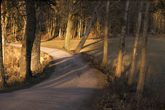 Road with bare trees on sunny day Stock Images
