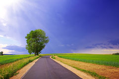 Road with barley field and blue sky . Royalty Free Stock Image