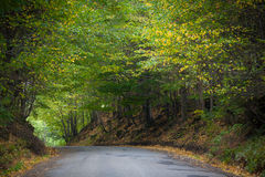 Road. Beautiful road in autumn forest Royalty Free Stock Photo
