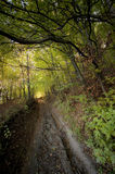 Road in a beautiful forest in summer Royalty Free Stock Photo