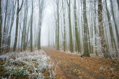 Road through a beautiful frozen forest in winter Stock Photography