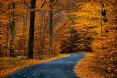 Road in beautiful golden beech forest during autumn Stock Photos