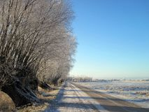 Road and beautiful old snowy trees, Lithuania Stock Photo