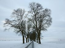 Road and beautiful old snowy trees, Lithuania Royalty Free Stock Photography