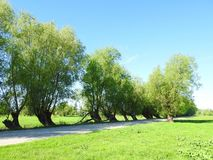 Road and beautiful old trees in spring, Lithuania stock photography