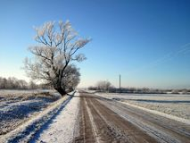 Road and beautiful snowy trees, Lithuania Royalty Free Stock Photos