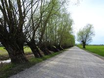 Road and beautiful spring  trees, Lithuania Royalty Free Stock Photo