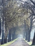 Road and beautiful spring  trees, Lithuania Stock Image